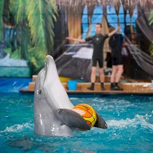 Дельфинарии, океанариумы Котельников