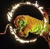 Цирки в Котельниках
