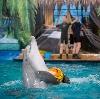 Дельфинарии, океанариумы в Котельниках
